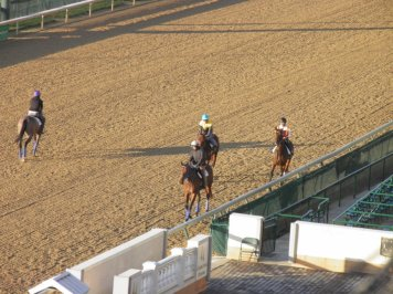 Horses coming out onto the track