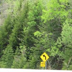 Dense forests